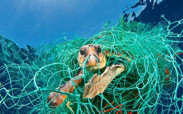 معرفی استارتاپهایی که در زمینه نجات اقیانوسها فعالیت میکنند