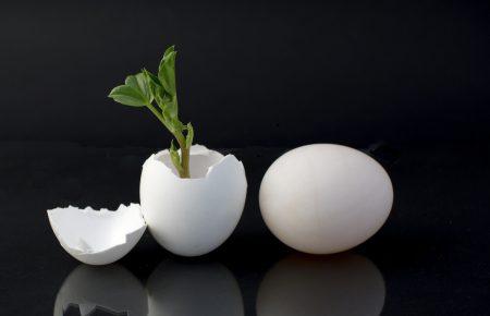 تئوری تخم مرغ چیست و چه درسهای برای کارآفرینان دارد؟